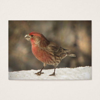 House Finch ATC Business Card