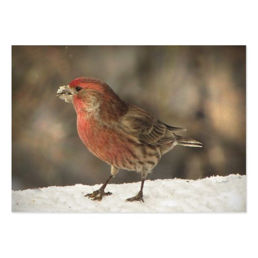 House Finch ATC Large Business Cards (Pack Of 100)