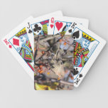House Finch Bicycle Poker Deck