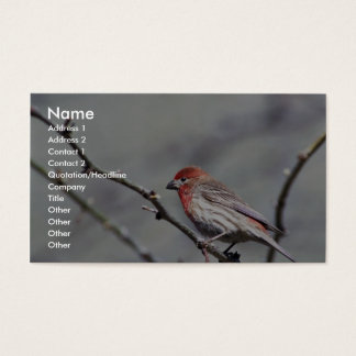House finch business card
