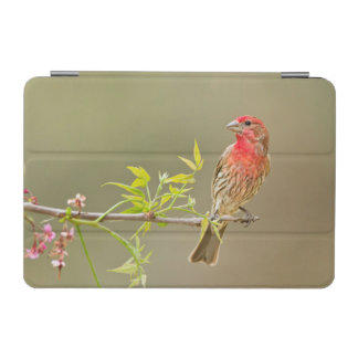 House Finch (Carpodacus Mexicanus) Male Perched iPad Mini Cover