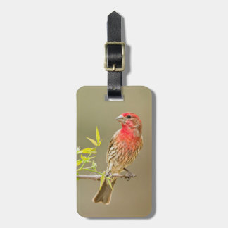 House Finch (Carpodacus Mexicanus) Male Perched Bag Tags