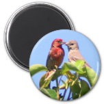 House Finch Couple 2 Inch Round Magnet