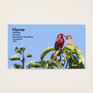 House Finch Couple Business Card