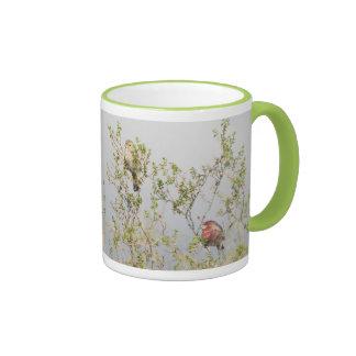 House Finch Couple Mug