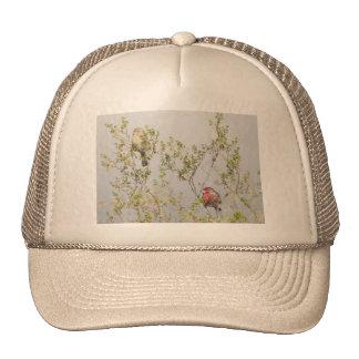 House Finch Couple Trucker Hat