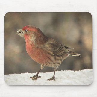 House Finch Mouse Pad