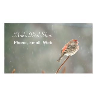 House Finch on a Branch Double-Sided Standard Business Cards (Pack Of 100)