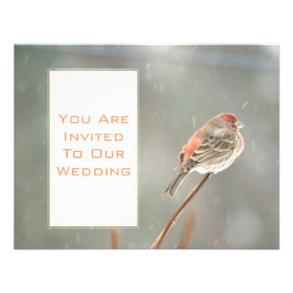 House Finch on a Branch Personalized Invitation