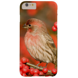 House Finch on Common Winterberry Barely There iPhone 6 Plus Case