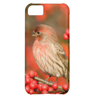 House Finch on Common Winterberry iPhone 5C Case