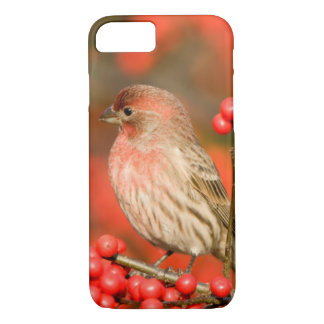 House Finch on Common Winterberry iPhone 7 Case