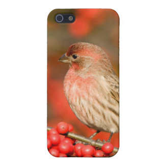 House Finch on Common Winterberry iPhone SE/5/5s Cover