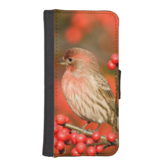 House Finch on Common Winterberry iPhone SE/5/5s Wallet