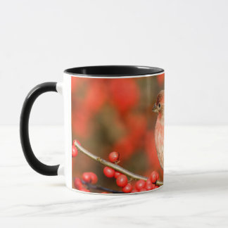 House Finch on Common Winterberry Mug
