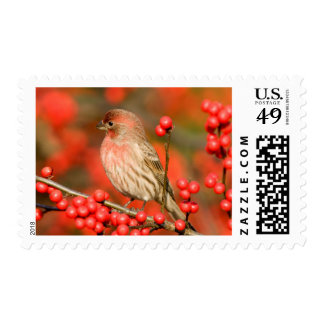 House Finch on Common Winterberry Stamps