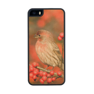 House Finch on Common Winterberry Wood Phone Case For iPhone SE/5/5s