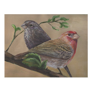 House Finch Pair Postcard