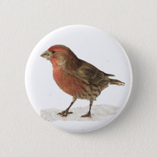 House Finch Pinback Button