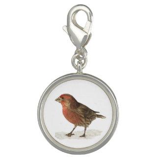 House Finch Bracelet