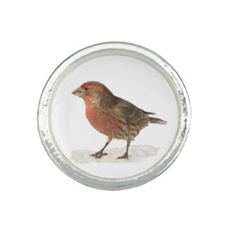 House Finch Rings