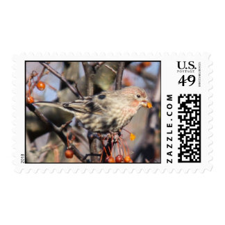 House Finch Postage Stamps