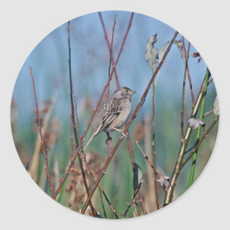 House Finch Stickers