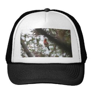 House Finch Trucker Hat