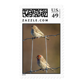 House Finches Postage