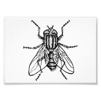 House Fly Photo Print