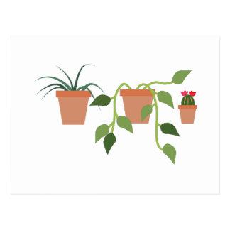House Plants Postcard