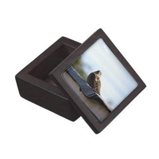 House Sparrow 3 Premium Gift Boxes