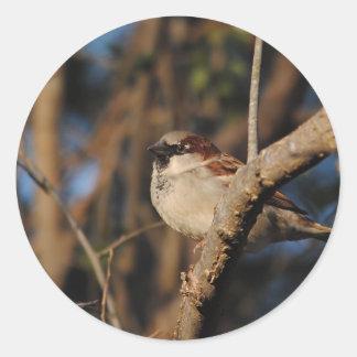 House Sparrow Classic Round Sticker