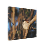 House Sparrow Gallery Wrapped Canvas
