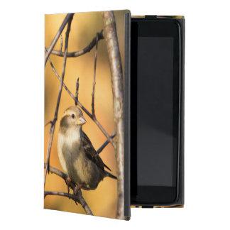 House Sparrow In Defiance, Ohio, USA iPad Mini Cover
