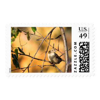 House Sparrow In Defiance, Ohio, USA Postage Stamp