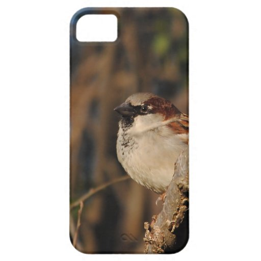 House Sparrow iPhone 5 Cases