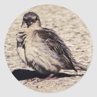 House Sparrow Mood Photograph Stickers