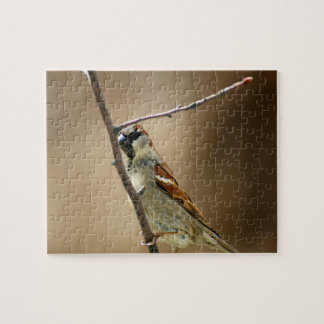 House Sparrow Perched on a Branch Jigsaw Puzzle
