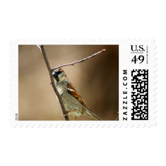 House Sparrow Perched on a Branch Postage