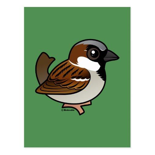 House Sparrow Post Card