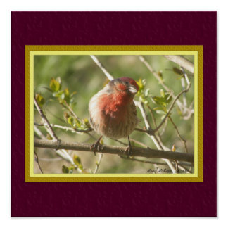 House Sparrow Poster with Faux Matting
