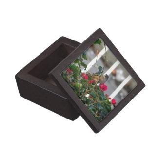 House Sparrow Premium Keepsake Boxes