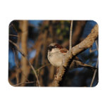 House Sparrow Rectangle Magnets