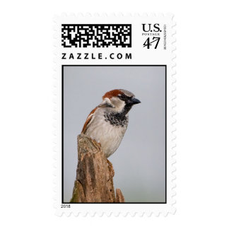 House Sparrow Stamp