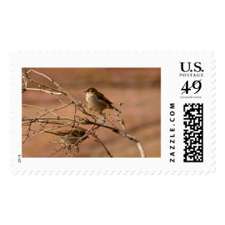 House Sparrows Large Postage