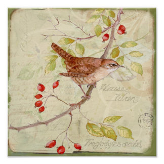 House Wren Collage Poster