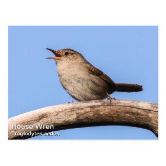 House Wren Postcard