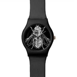 Housefly Watch