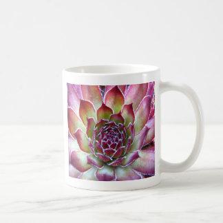 houseleek mugs
